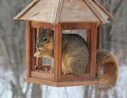 Donna Bosela - Squirrel Sneaking Food