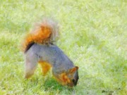 Tails Prints - Squirrelly Print by Jeff Kolker