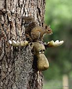 Escape Photo Originals - Squirrelly Thoughts by Debbie May