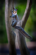 Squirrel Photos - Squirrley by Doug Sturgess