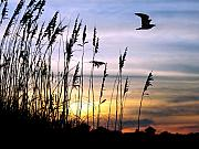 Sea Oats Prints - St Augustine Beach Sunset Print by Addison Fitzgerald