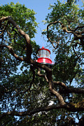 St. Augustine Prints - St Augustine Tree House Print by Skip Willits