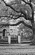 St. Charles Art - St. Charles Ave. monochrome by Steve Harrington