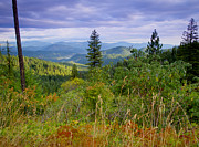 North Idaho Prints - St. Joe Forest View Print by Idaho Scenic Images Linda Lantzy