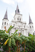 French Quarter Prints - St Louis Cathedral Rising Above Palms Jackson Square New Orleans Diffuse Glow Digital Art Print by Shawn OBrien