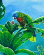 St. Lucia Parrot Prints - St. Lucia Parrot and bwa pain marron Print by Christopher Cox