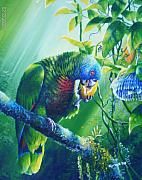 Passionfruit Posters - St. Lucia Parrot and Wild Passionfruit Poster by Christopher Cox