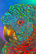 Greeting Card Tapestries - Textiles - St. Lucian Parrot by Daniel Jean-Baptiste