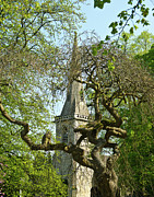 St Photos - St Marys Church Through the Trees by Douglas Barnett