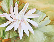 Puerto Rico Paintings - St. Regis Lotus by Monica Linville
