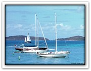 Winter Scenes Rural Scenes Framed Prints - St-Thomas Virgin Islands Trio Framed Print by Danielle  Parent