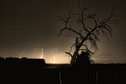 Lightning Weather Stock Images Art - St Vrain Tree Lightning Storm Sepia BW by James Bo Insogna