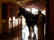 Stable Framed Prints - Stable Groom - 1 Framed Print by Linda Knorr Shafer
