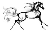 Horse Drawing Digital Art Posters - Staceys Arabian Horse Poster by Stacey Mayer