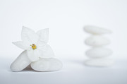 Focus On Foreground Art - Stack Of White Pebbles And Jasmine Flower by Gil Guelfucci