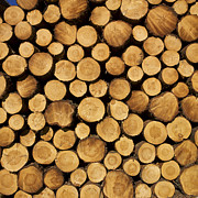Fill Posters - Stack of wood logs. Poster by Bernard Jaubert