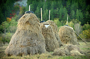 Haystack Framed Prints - Stacked Hay Framed Print by Gunay Mutlu