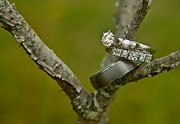 Pine Needles Photos - Stacked Wedding Bands 1 by Douglas Barnett