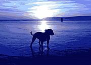 Blue Posters - Staffordshire Bull Terrier on Beach Poster by Michael Tompsett