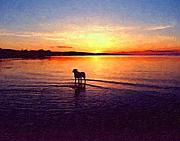 Sunrise Painting Acrylic Prints - Staffordshire Bull Terrier on Lake Acrylic Print by Michael Tompsett