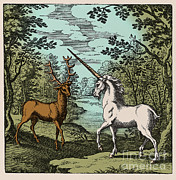White Unicorn Photos - Stag And Unicorn, 18th Century by Science Source