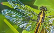 Dragonfly Painting Originals - Stained Glass Wings by Bryan Ory