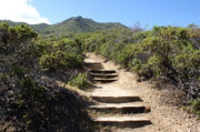 Mill Valley Prints - Stairway to Heaven on Mt Tamalpais Print by Ben Upham