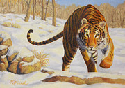 Big Cats Framed Prints - Stalking Siberian Tiger Framed Print by Crista Forest