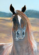 Sonoma County Originals - Stallion by Ofelia  Arreola