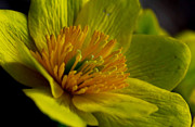 Wisconsin Wildflowers Prints - Stamen and Pistil Print by Ryan and Karin Keranen