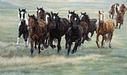 Rider Framed Prints - Stampede Framed Print by JQ Licensing