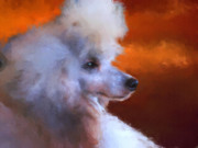 Standard Paintings - Standard Poodle Portrait by Jai Johnson