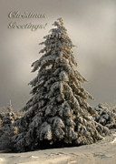 Snowy Holiday Card Posters - Standing Tall Christmas Card Poster by Lois Bryan