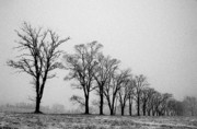 Off The Beaten Path Photography - Andrew Alexander - Standing Tall