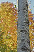 Gatlinburg Prints - Standing Tall Print by Mike Flake