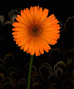 Orange Floral Framed Prints - Standing Tall Framed Print by Suzanne Gaff
