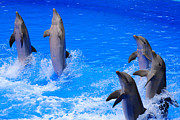 Dolphin Photo Framed Prints - Standing to Attention Framed Print by Rob Hawkins