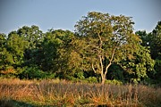 Landscapes - Stands In The Sun - Holmdel Park by Angie McKenzie