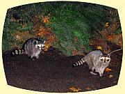 Raccoons Framed Prints - Stanley Park Rascals Framed Print by Will Borden