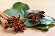 Anise Posters - Star anise and cinnamon Poster by Paul Cowan