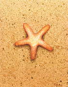Featured Prints - Star Fish Print by Katherine Young-Beck