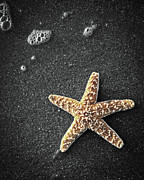 Sea Shell Digital Art Photo Posters - Star Fish Poster by Steve McKinzie