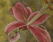 Flower Pastels Metal Prints - Star Gazer Metal Print by Meg Goff