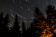 Startrails Photo Prints - Star Trails Above Spruce Tree Line Print by Darcy Michaelchuk