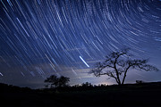 Y120907 Art - Star Trails And Tree Silhouette by Michael Lawrence Photography