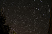 Treetops Prints - Star Trails Around Polaris Print by Rolf Geissinger