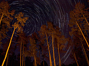 Pauls Colorado Photography Prints - Star Trails Lit Aspens Print by Paul Gana