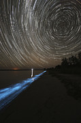 Luminescence Posters - Star Trails Over Bioluminescence Poster by Philip Hart