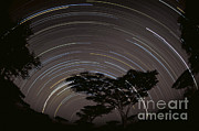 Greg Dimijian - Star Trails Over The Southern Serengeti