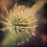Instagramhub Photos - Starburst by Dave Edens